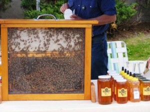 bees at the beeton honey festival