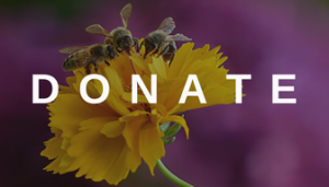 DONATE 1 300x171 - Save The Bees