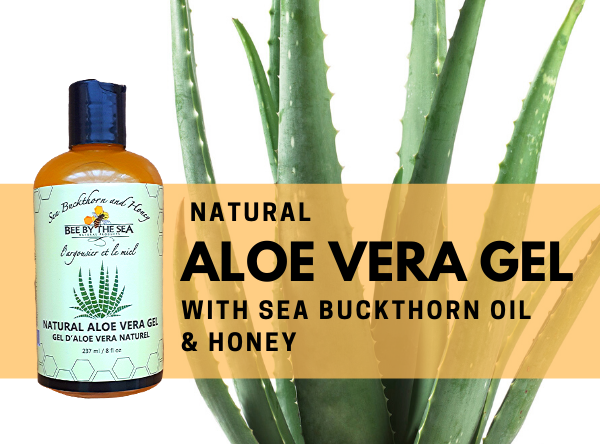 aloe feature 11 - Bee By The Sea